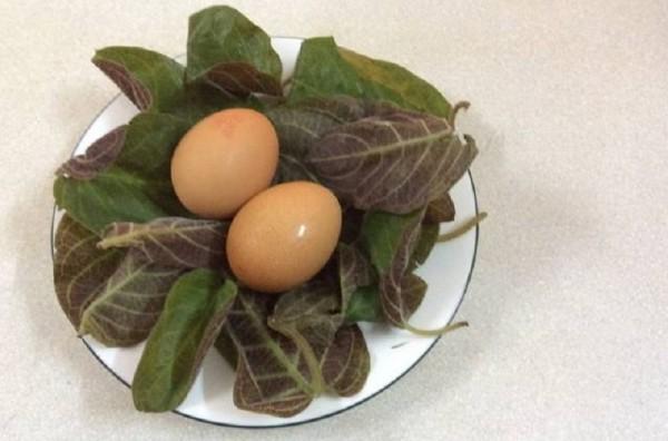 Cách làm Trứng gà lá mơ trị táo bón, tiêu chảy, kiết lỵ