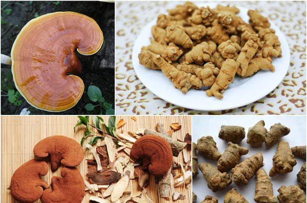 Các bài thuốc hỗ trợ chữa bệnh từ nấm linh chi