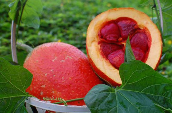 Thành phần dinh dưỡng và tác dụng của cây gấc