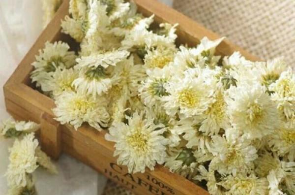 Bạch cúc hoa là gì? Tác dụng - Cách dùng - Giá bán