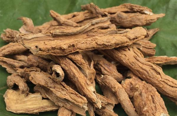 Vị thuốc địa cốt bì có Công dụng gì? Liều lượng sử dụng