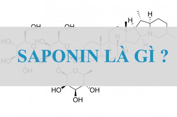 Saponin là gì? Tác dụng của saponin ra sao?