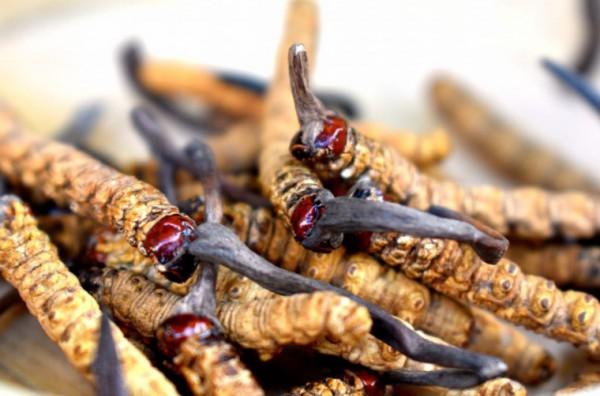 Đông trùng hạ thảo Bhutan có đắt không?