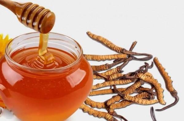 Hướng dẫn cách ngâm đông trùng hạ thảo với mật ong