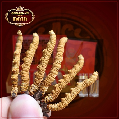Đông trùng hạ thảo Tây Tạng nguyên con loại 1 hộp 30g D010