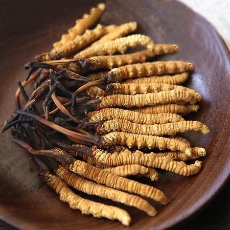 Đông trùng hạ thảo Tây Tạng nguyên con cao cấp hộp 1gr
