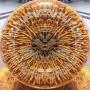 Đông trùng hạ thảo Tây Tạng cao cấp hộp 100gr loại 500 – 600 con