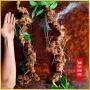 Sâm Ngọc Linh núi tự nhiên Kon Tum loại 6 lạng 1 củ