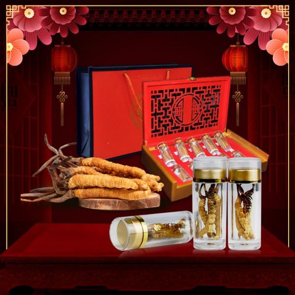 Hộp quà biếu đông trùng hạ thảo nguyên con Tây Tạng cao cấp loại 20g D009